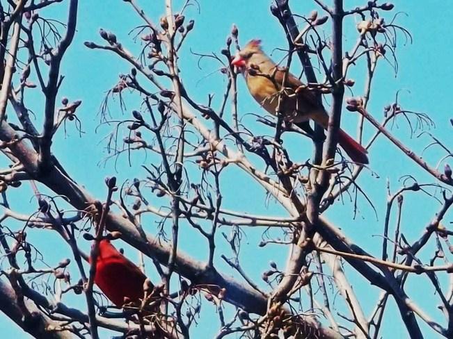 Pretty Birds Vancouver, British Columbia Canada