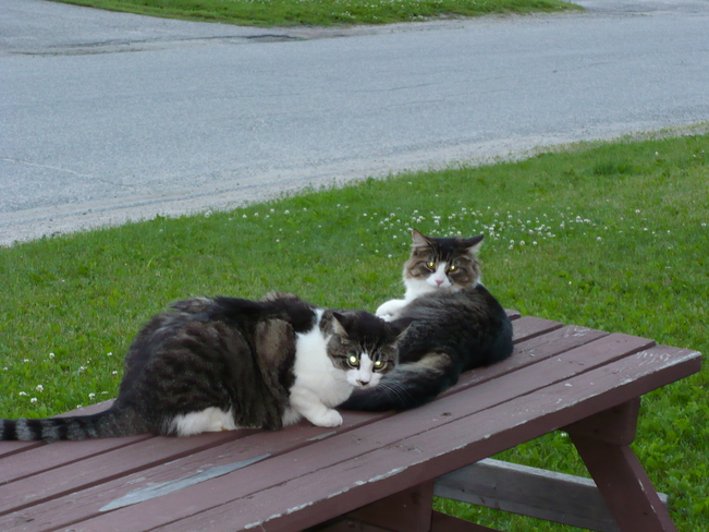 Chilling out on the picnic table Kapuskasing, Ontario Canada