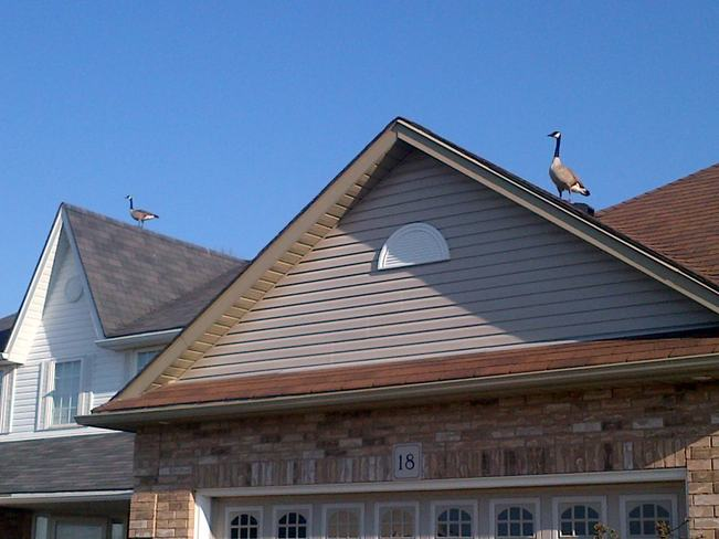 Spring roof inspection Guelph, Ontario Canada