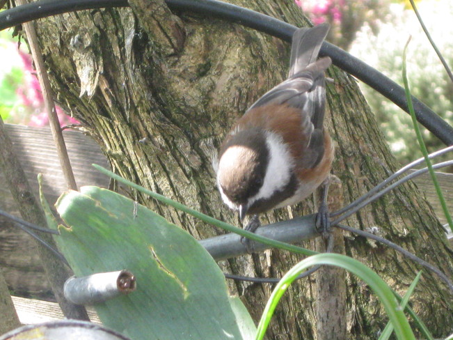 zeroing in on the target - suet in can