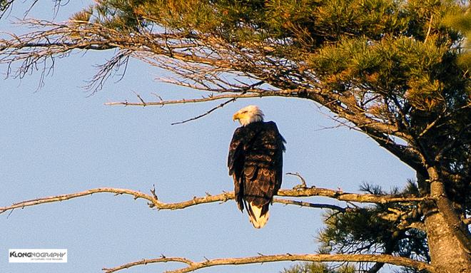 The Eagle has landed Halifax, Nova Scotia Canada