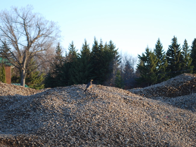 King of the Stone Pile Brandon, Manitoba Canada