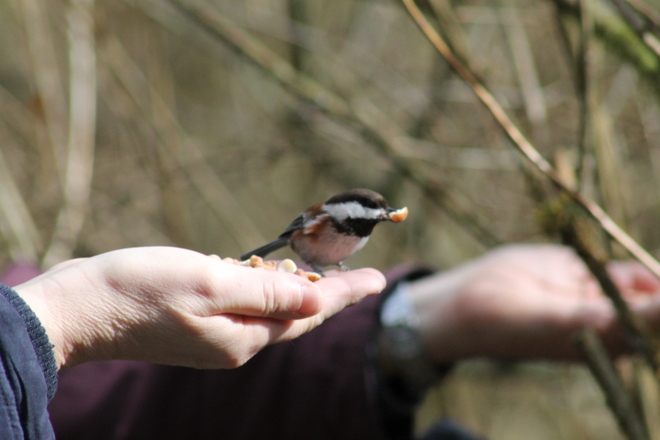 a bird in hand Abbotsford, British Columbia Canada