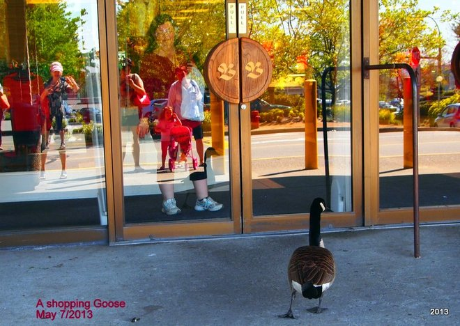 Goose goes shopping Vancouver, British Columbia Canada