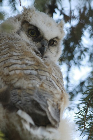 Baby Owl looking down at New World