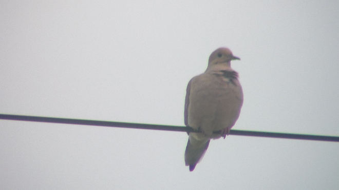 dove Ingonish, Nova Scotia Canada