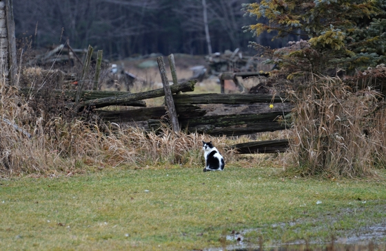 a cat in the field