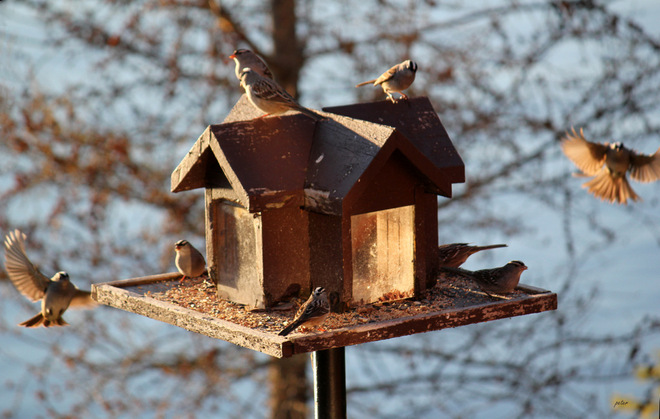 Dinner Time at the Bird Feeder Moonbeam, Ontario Canada