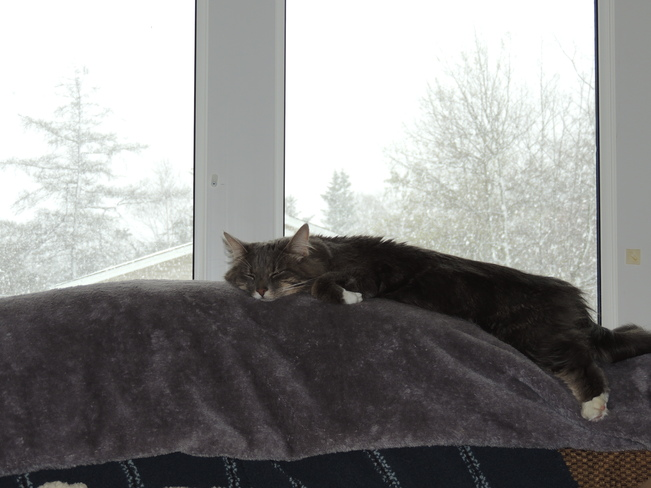 MIMI relaxing in the storm Gander, Newfoundland and Labrador Canada
