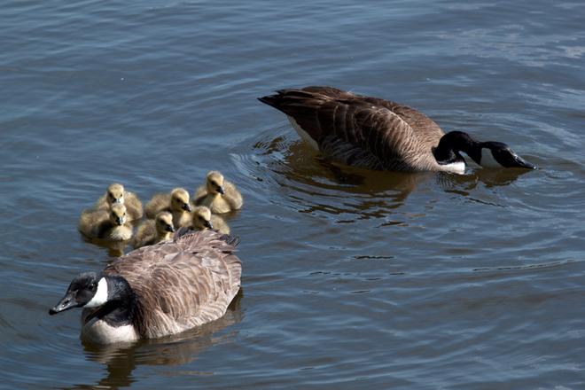 Happy Family Hamilton, Ontario Canada
