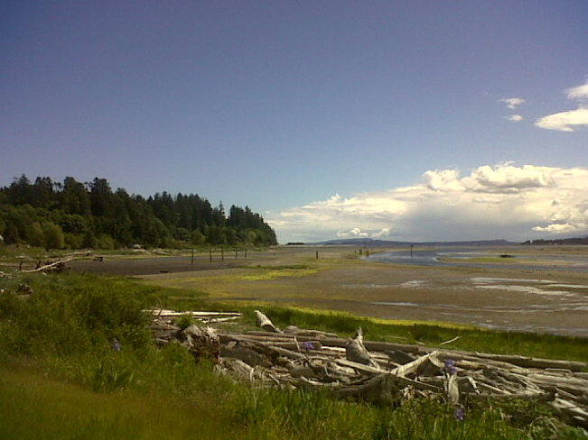 Driftwood, cloud and low tide. Courtenay, British Columbia Canada
