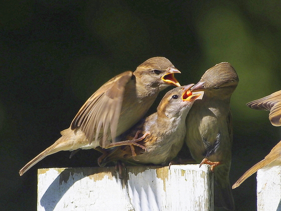Squabbling for a meal