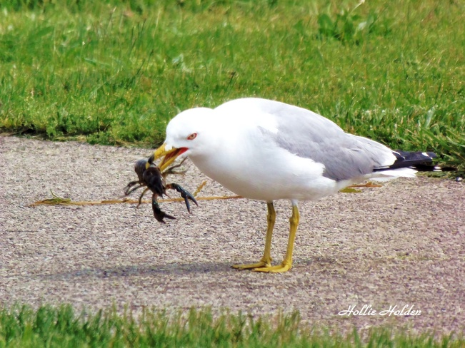 I've Got Dinner! Port Colborne, Ontario Canada