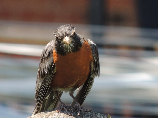 What are you looking at? Newmarket, Ontario Canada