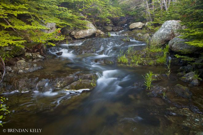 Boreal Stream Paradise, Newfoundland and Labrador Canada