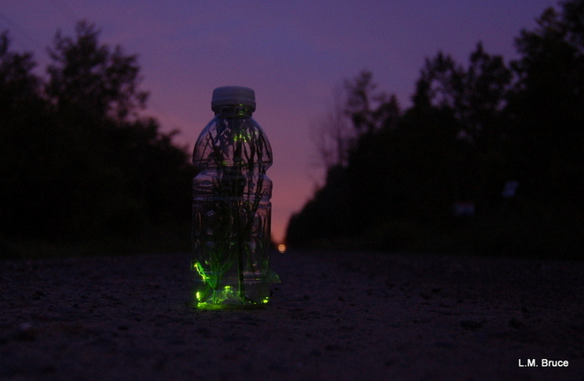 Lightning Bugs in a Bottle