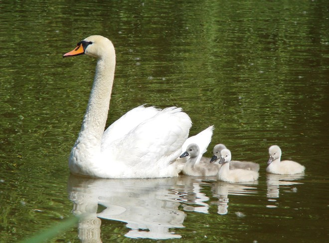 Mother and babies Stratford, Ontario Canada