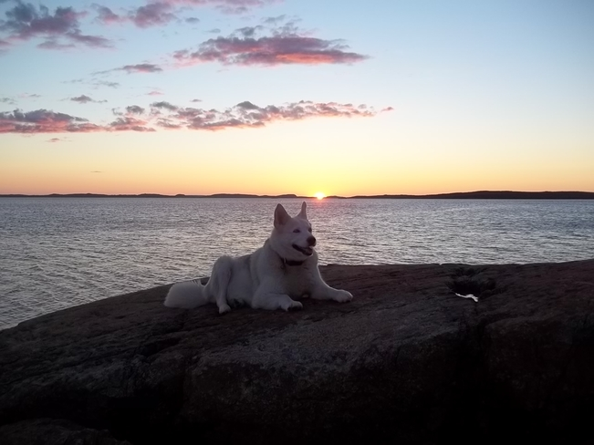 Nukka and The Sunset Birchy Bay, Newfoundland and Labrador Canada