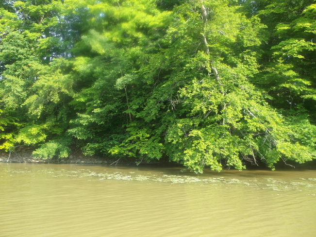 Trees on the Lake Port Dover, Ontario Canada