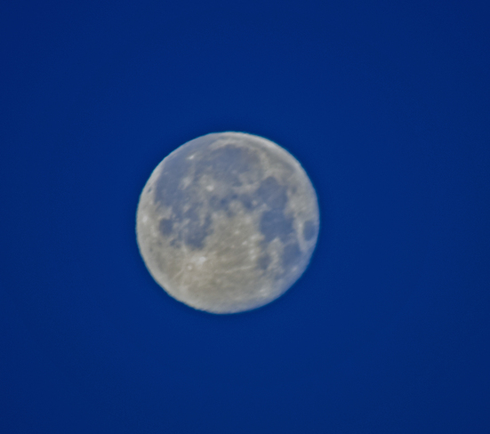 Super Moon, the morning after full,