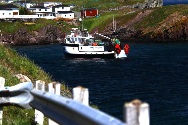 Port de Grave fishing boat returning to plant with catch Bay Roberts, Newfoundland and Labrador Canada