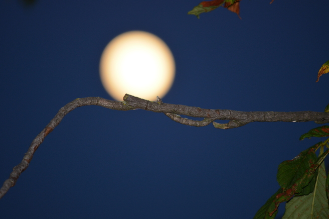 The Moon and the Tree Branch Richmond, British Columbia Canada
