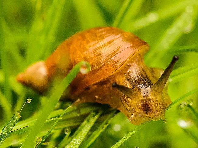 Garden Snail Chelsea, Quebec Canada