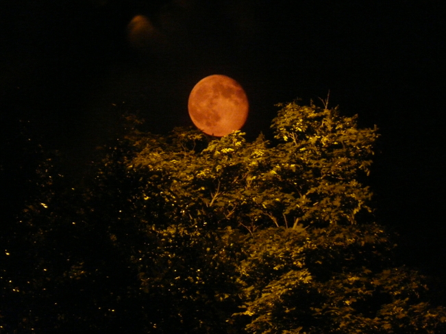 Red moon settling in the forest Milton, Ontario Canada