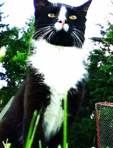 My Beautiful Cat Langenburg No. 181, Saskatchewan Canada