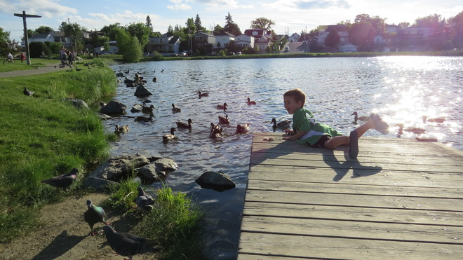 Friend with the ducks Timmins, Ontario Canada
