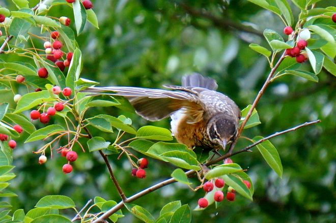 Having a Berry Good Time Kitchener, Ontario Canada