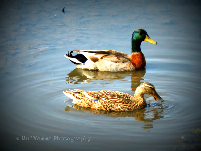Just Ducky! Goderich, Ontario Canada