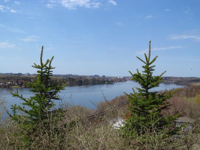 Between the trees Sudbury, Ontario Canada