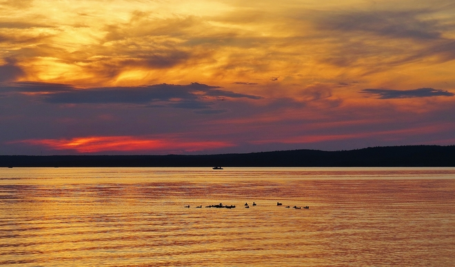 """Unusual sunset viewed by """"extended family"""" of ducks. North Bay, Ontario Canada"""