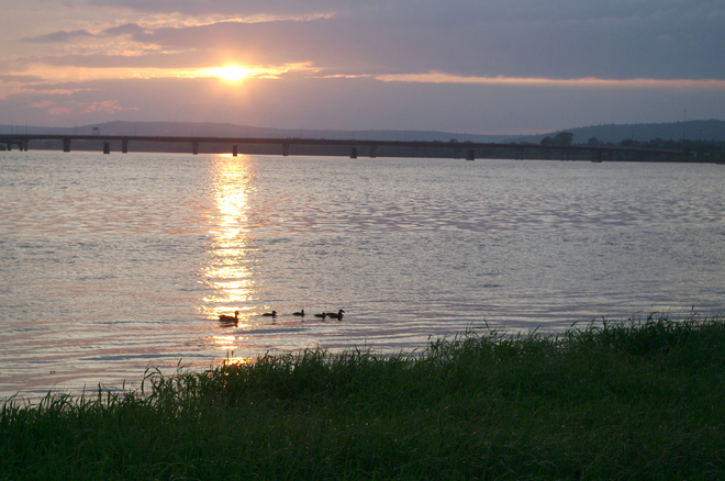 Ducks in the Sun Set Fredericton, New Brunswick Canada