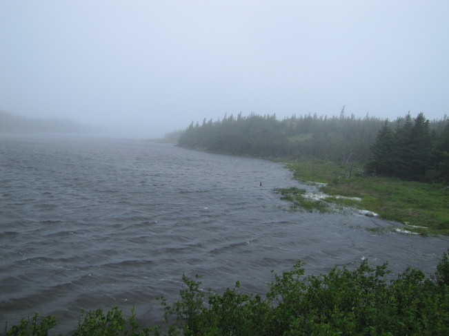 Rain drizzle and fog Long Harbour-Mount Arlington Heights, Newfoundland and Labrador Canada