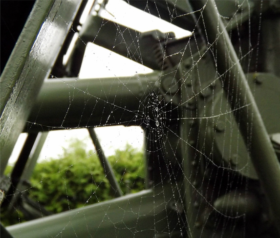 Spider Web Saint John, New Brunswick Canada