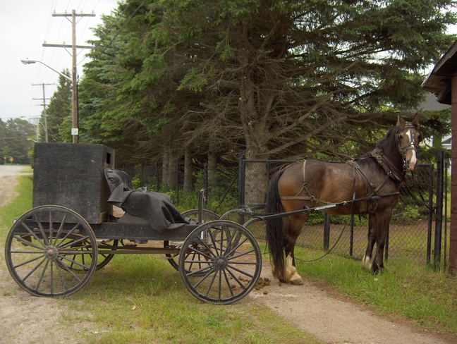 Horse & Buggy On Government Road Massey On Massey, Ontario Canada