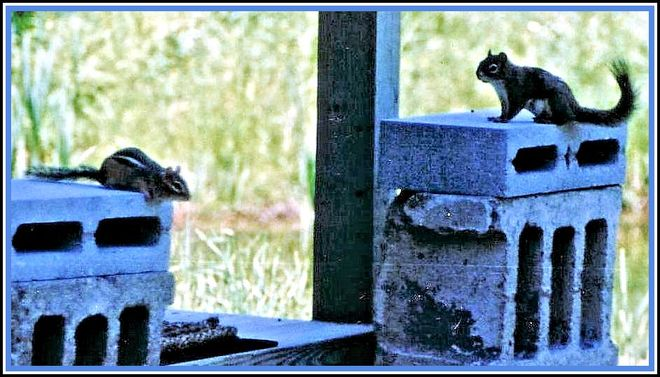 A Convention of Critters Discusses Yappy Neighbour :) Port Loring, Ontario Canada