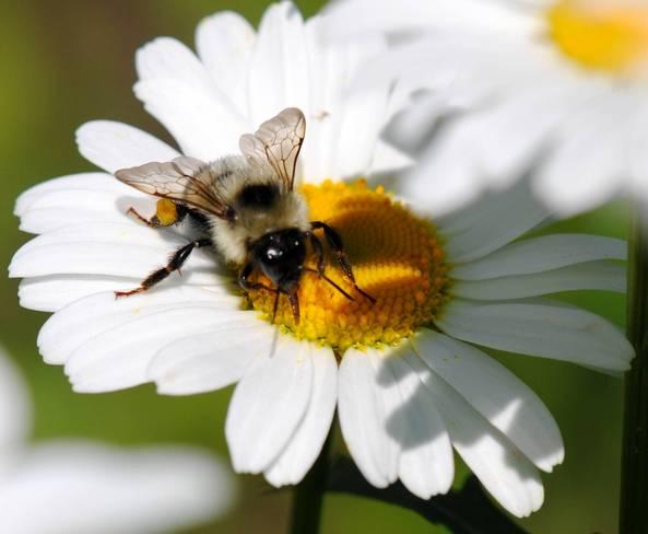 Busy Bee Winnipeg, Manitoba Canada