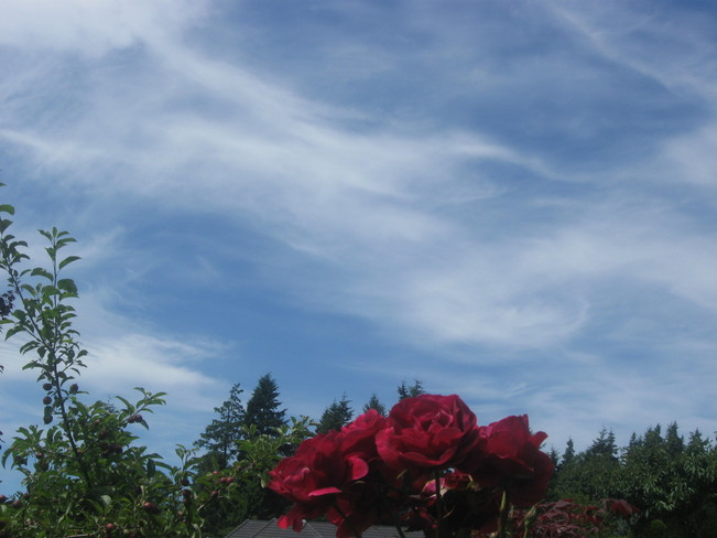 beyond the roses --- Surrey, British Columbia Canada