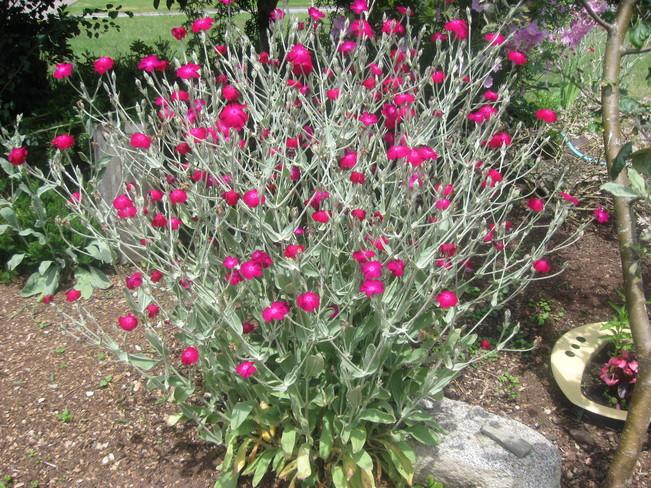 petite flowers Surrey, British Columbia Canada