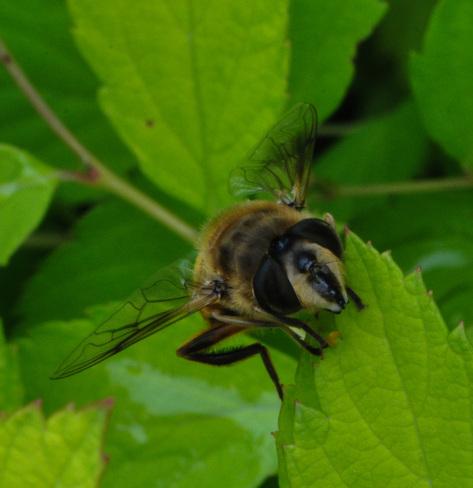 Bee Crediton, Ontario Canada