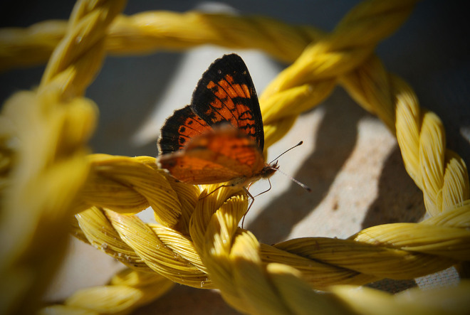 Butterfly Iroquois Falls, Ontario Canada