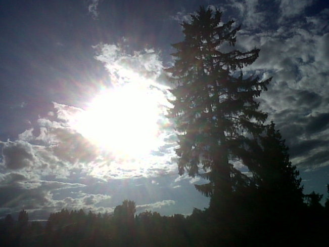 Big tree, clouds and sun. Courtenay, British Columbia Canada