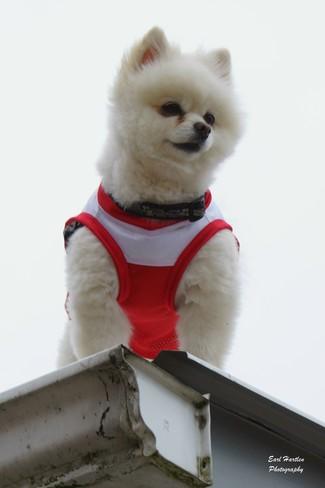 Super Dog Port Dover, Ontario Canada