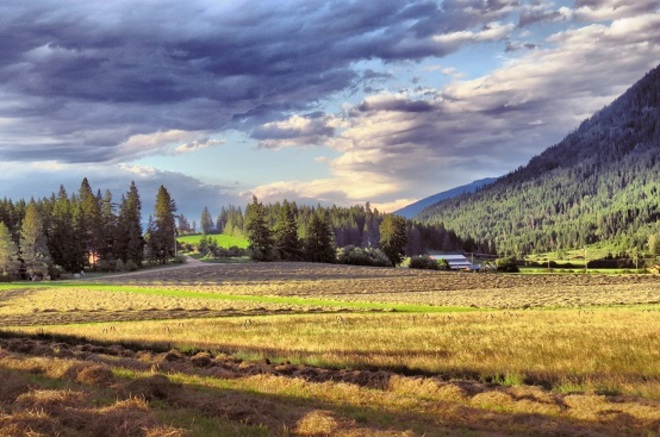 Making Hay Enderby, British Columbia Canada