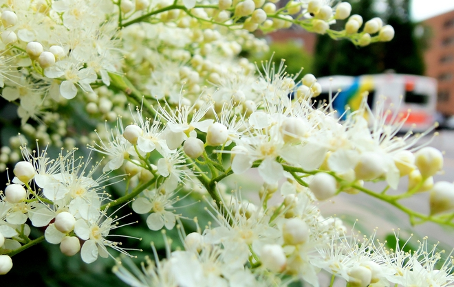 Spirea and Bus