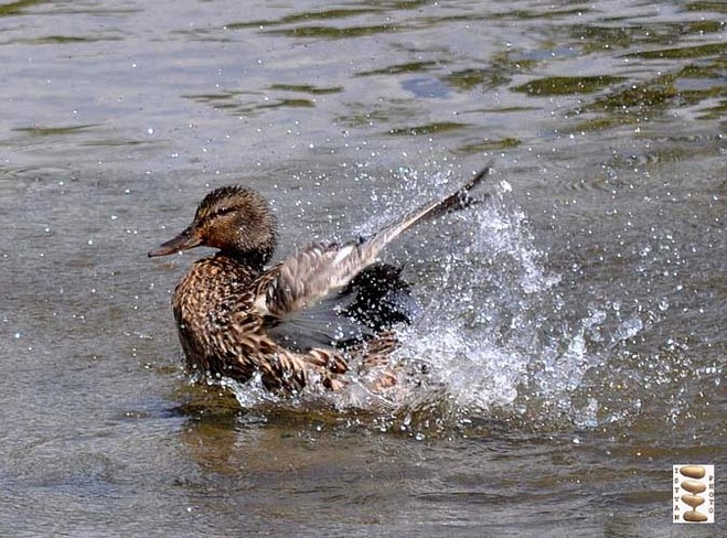 Cooling down Toronto, Ontario Canada