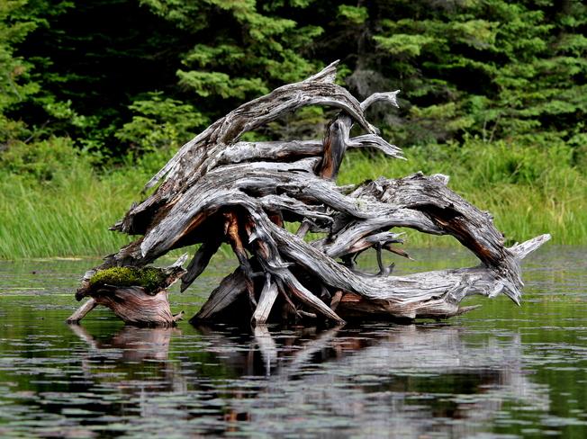 Natures Art Fergus, Ontario Canada